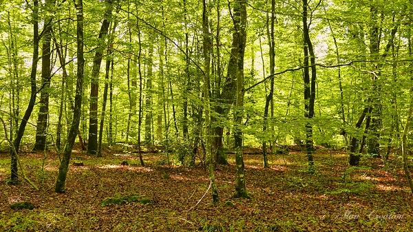 Promenons nous dans les bois ........