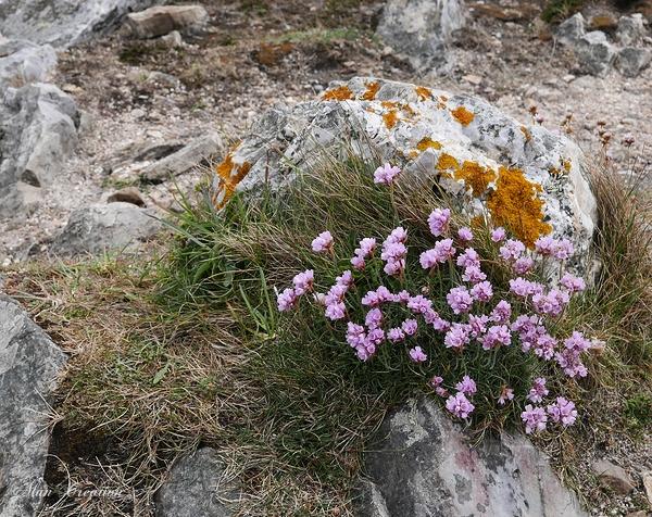Falaise fleurie