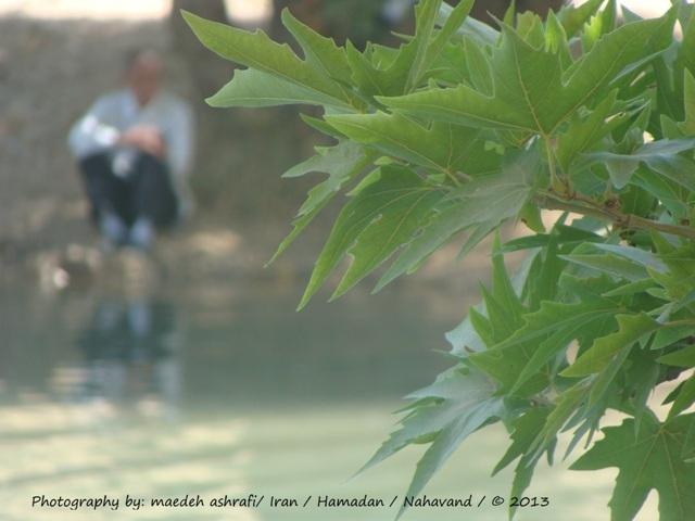 اگر ديدي پيرمردي به درختي تكيه كرده...