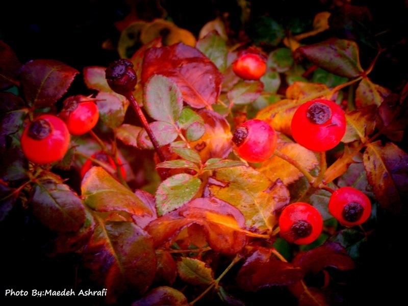 Spring in autumn