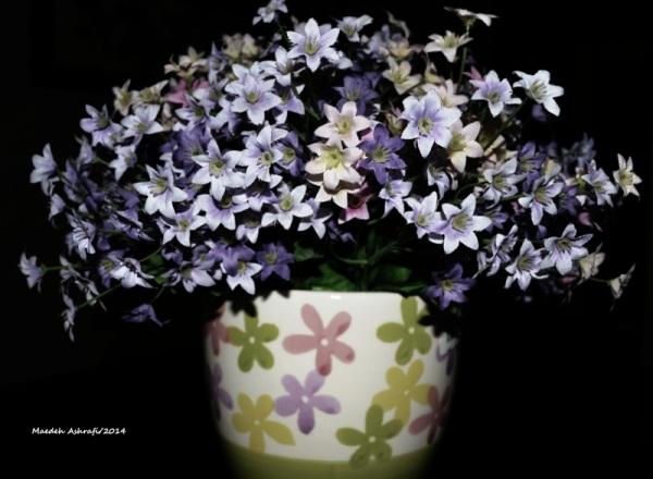 Flower Vase My