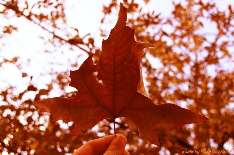 autumn(گلاریژان)