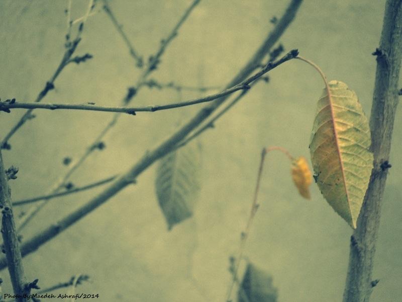 autumn(2 گلاریژان)