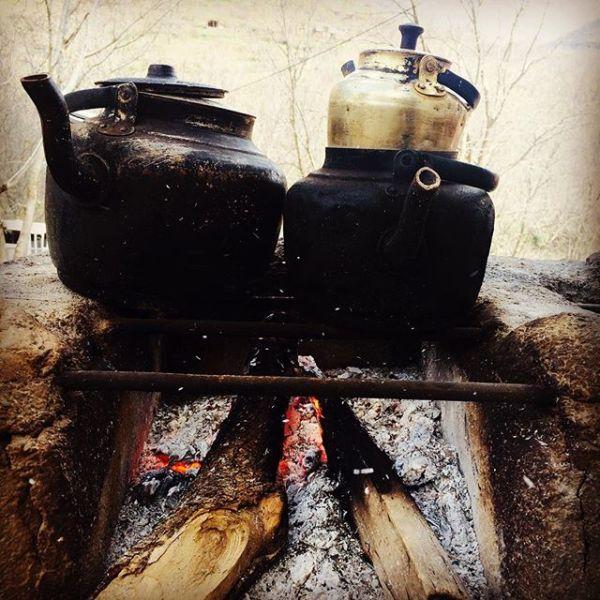 چای قند پهلو