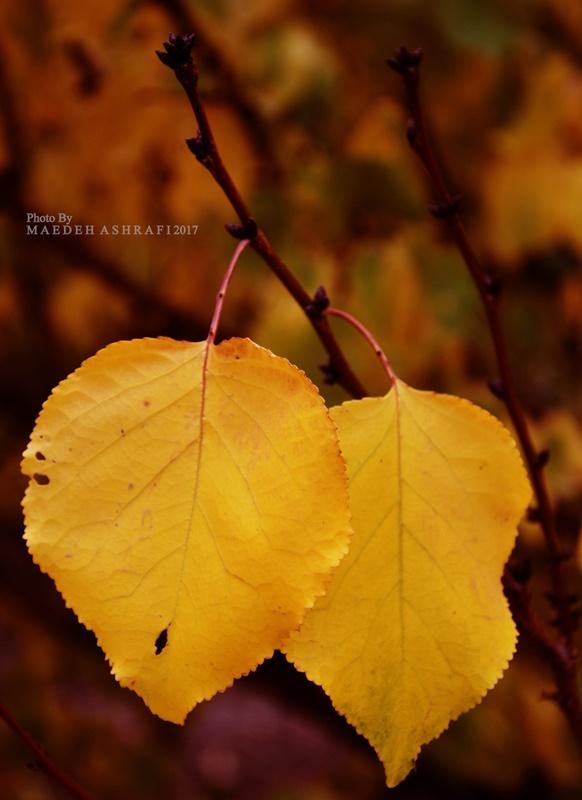 hamedan/autumn/2017#1