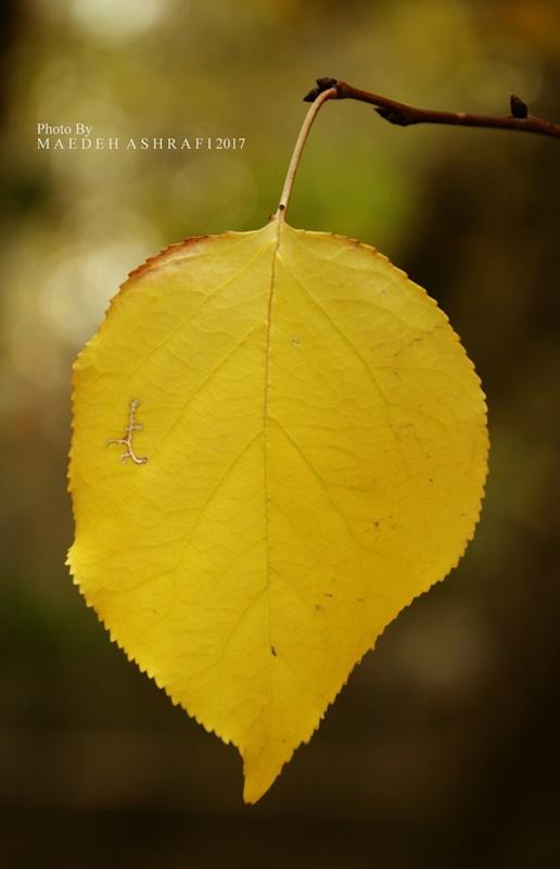 hamedan/autumn/2017#3
