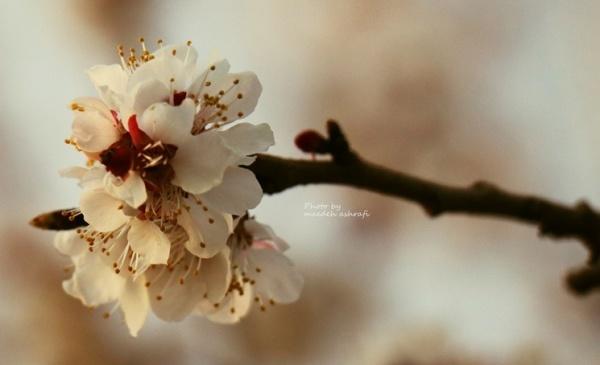 Spring#2