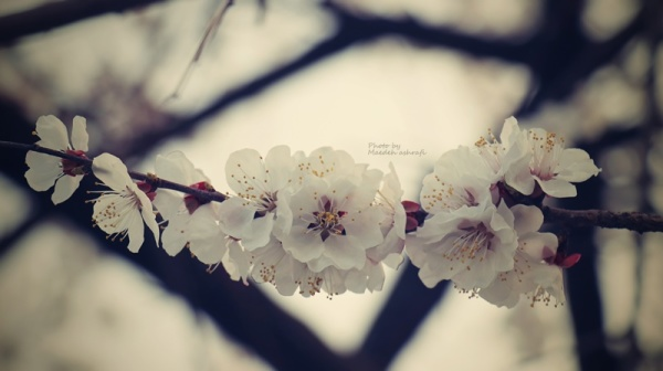 Spring#3