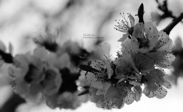Spring#4