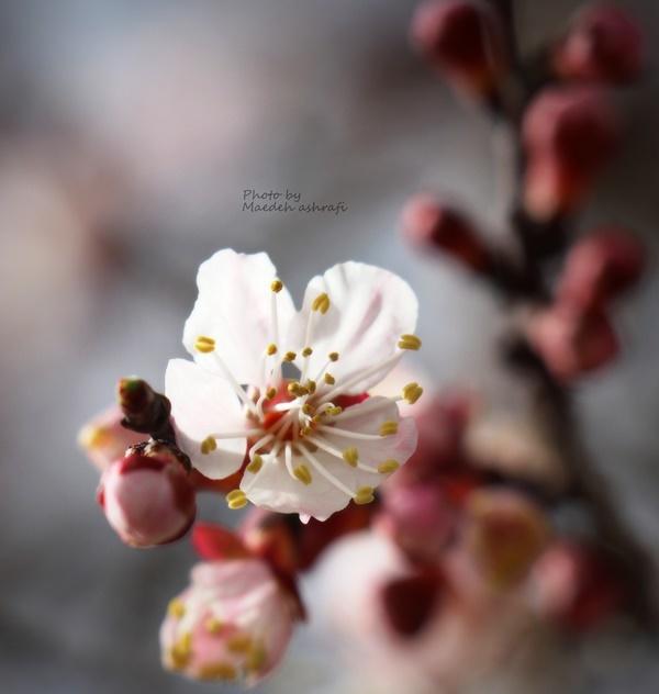 Spring#5