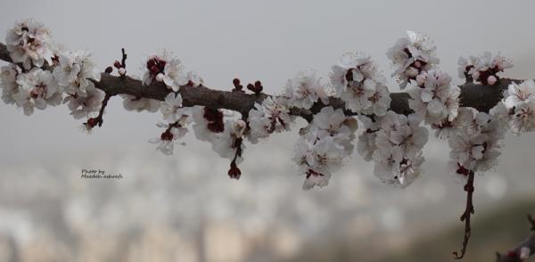 Spring#7
