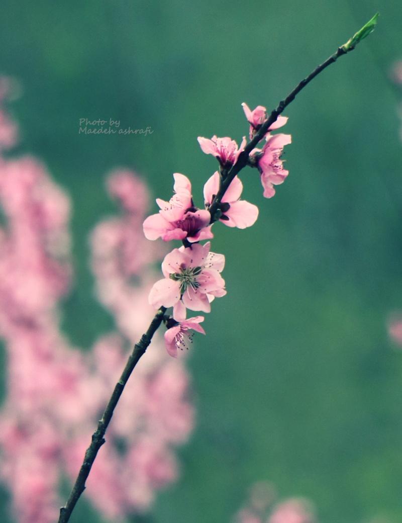 Spring#8