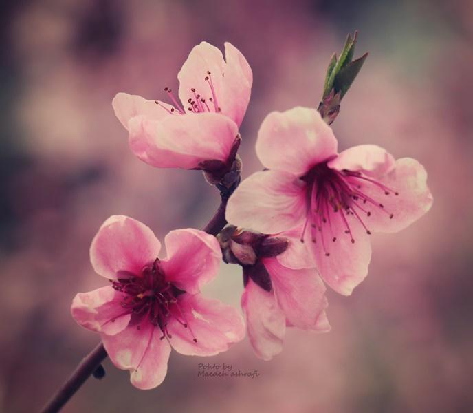 Spring#9