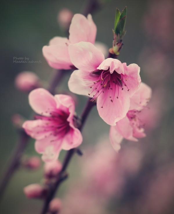 Spring#10