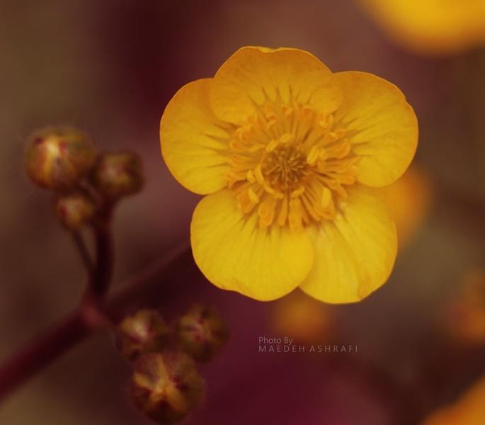 بهار دلنشین