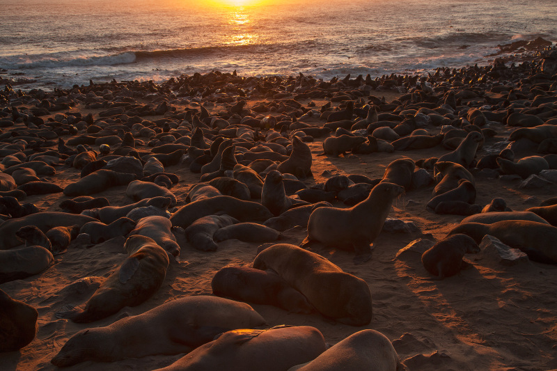 Seal colony #1
