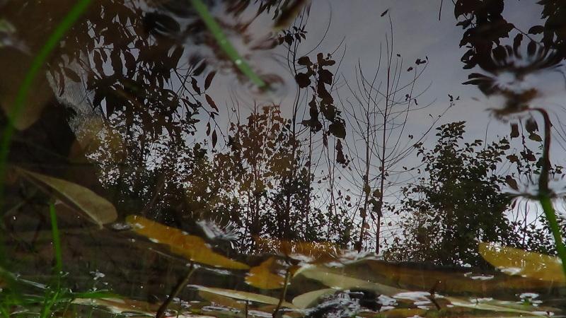 Fall in water