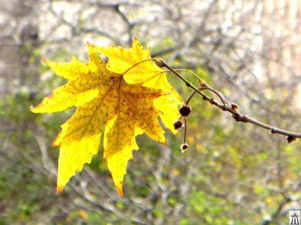 Voodoo of Fall