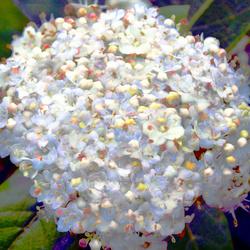 dabnotu,plant,flower,digital,photography,the gimp