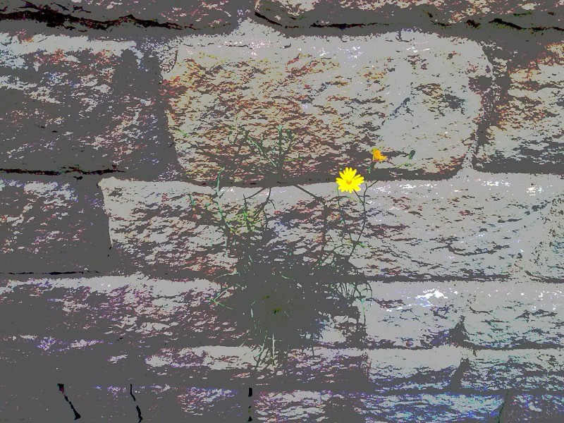 Barcelona, flower growing on the side of a church.