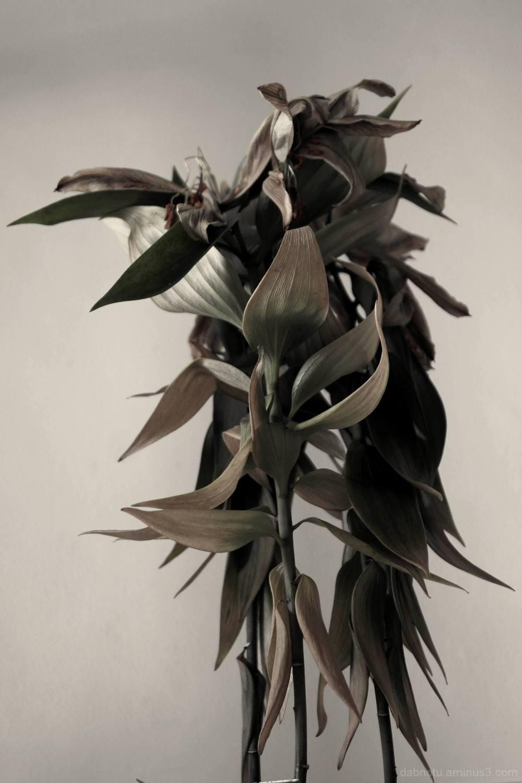 Plant, interior, desaturated, sharpened, The GIMP.