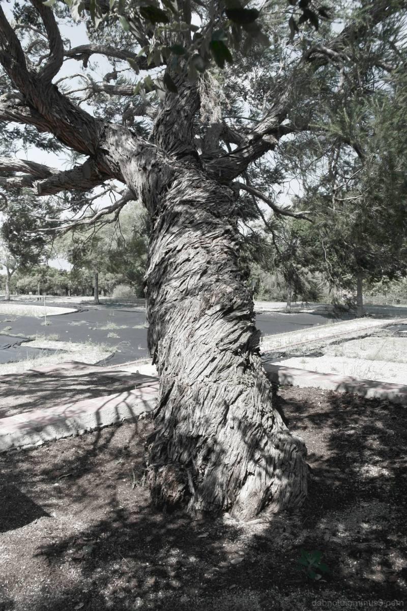 Barcelona park tree, edited with The GIMP.