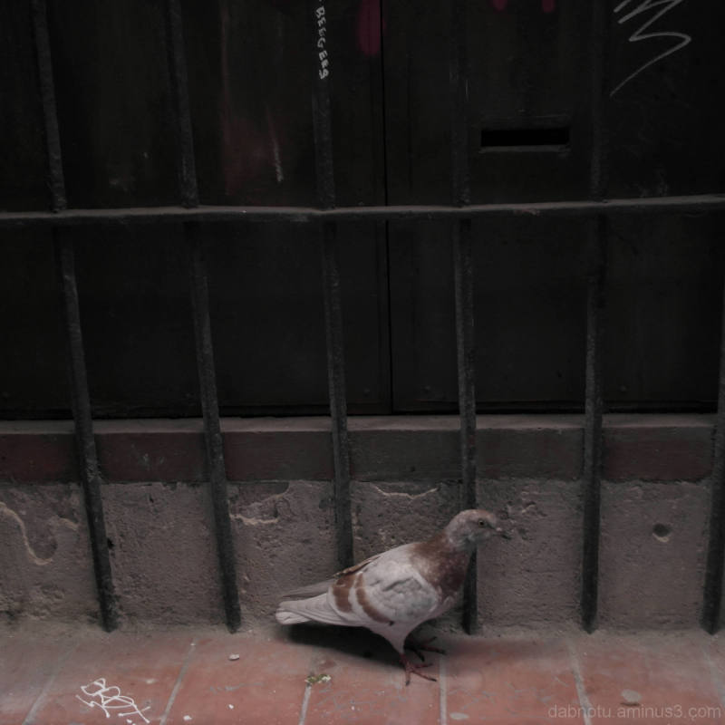 A pigeon along a grungy windowsill in Barcelona.
