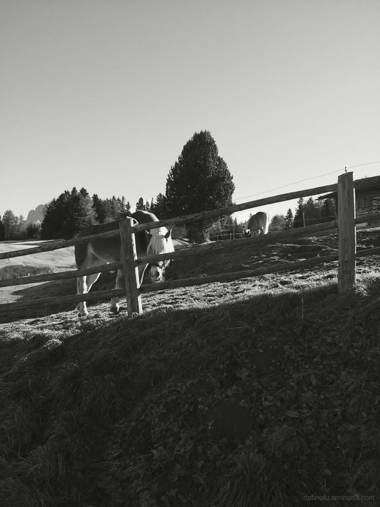 Black and white smartphone photography.