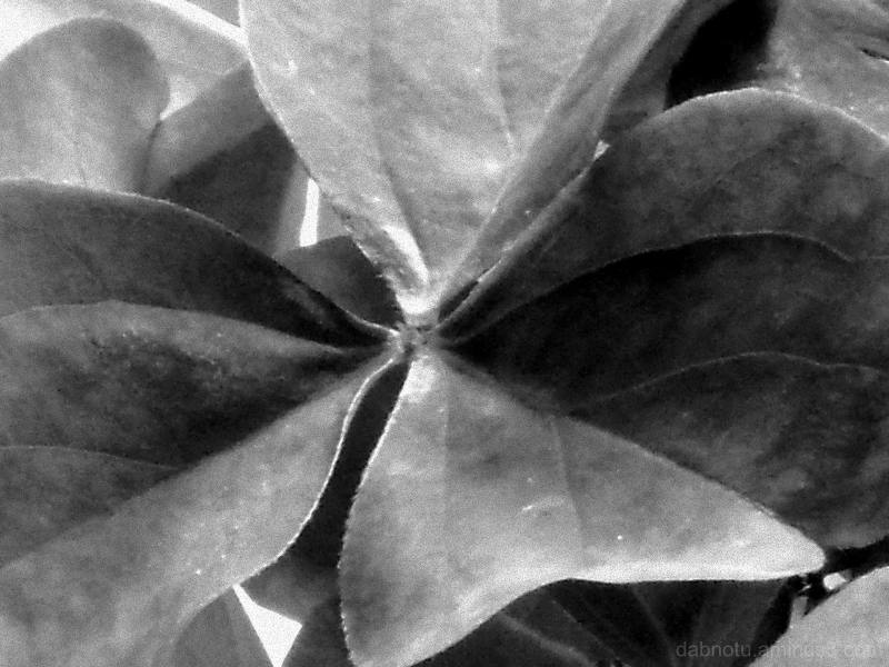 Monochrome macro. Black and white. Grayscale. Yep!