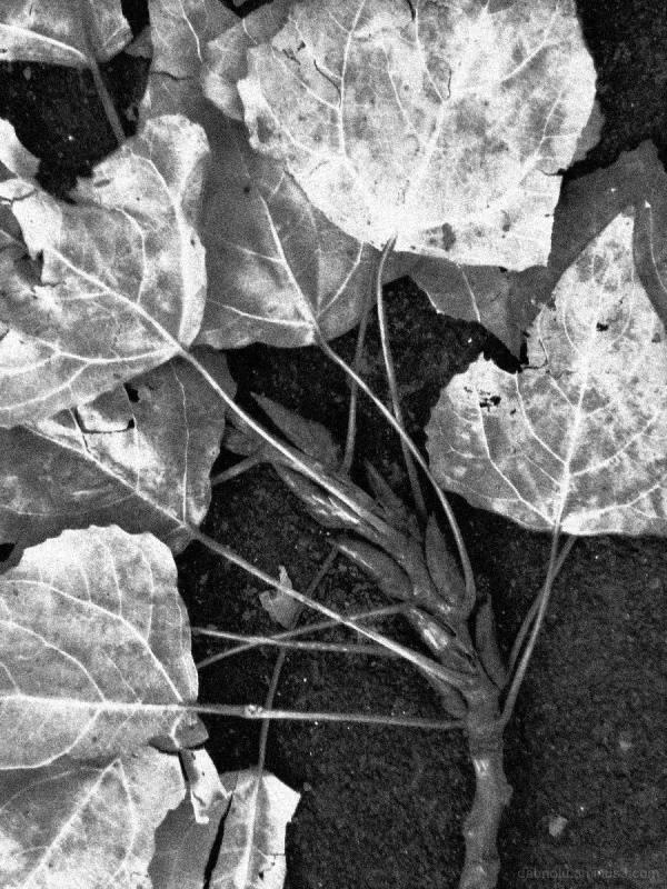 Monochrome macro. Black and white. Grayscale. Yep!