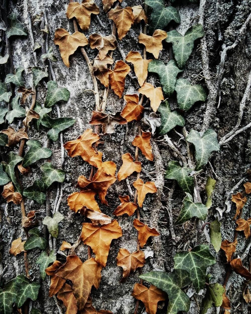 Slightly edited nature smartphotography!