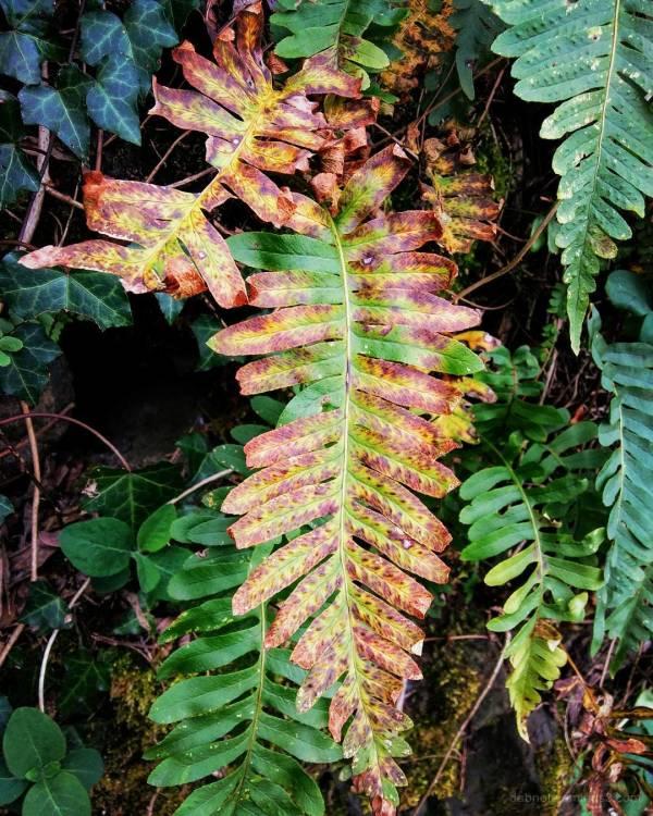 Slightly edited nature smartphotography