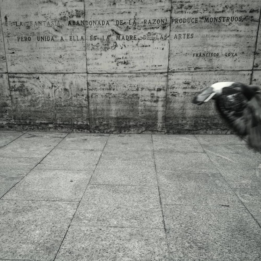#PlazaDelPilar #Zaragoza #Aragón #España #Europe