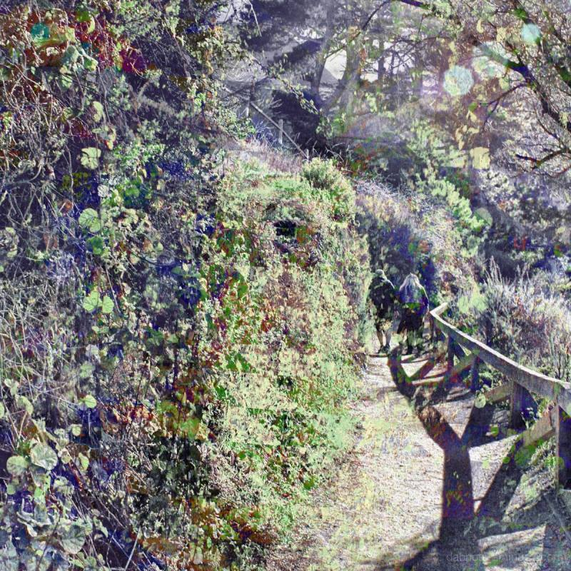 Path in/at McWay Falls in Big Sur California USofA
