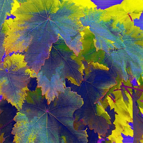macro, img-encode, sonic visualizer, plant, glitch