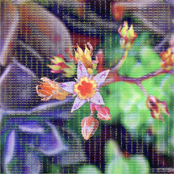 macro, img-encode, sonic visualizer, plant, glitch
