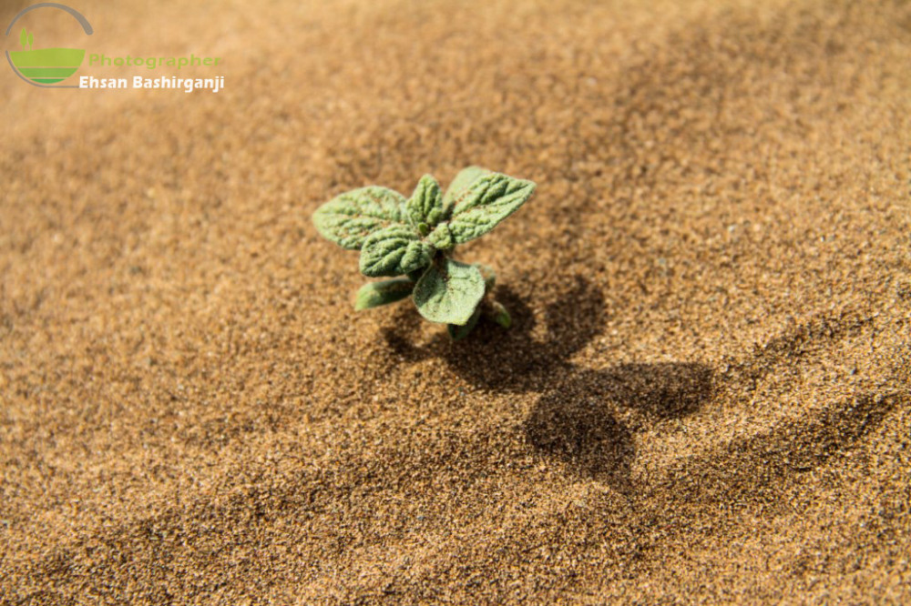 Sprout in the desert