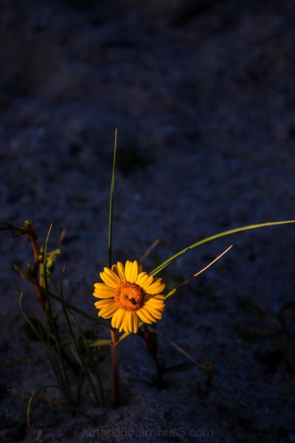 Flor na areia