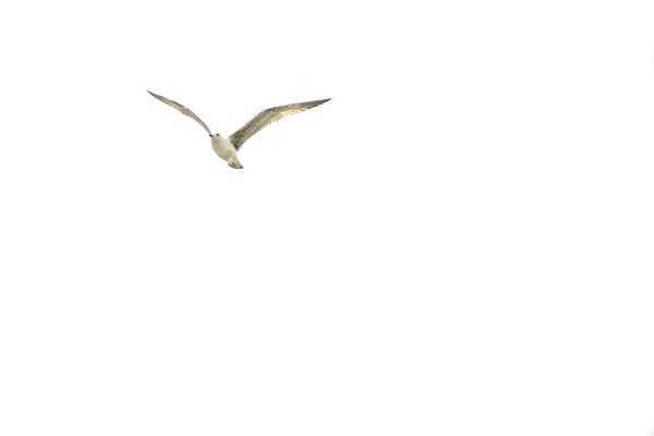 Uma gaivota