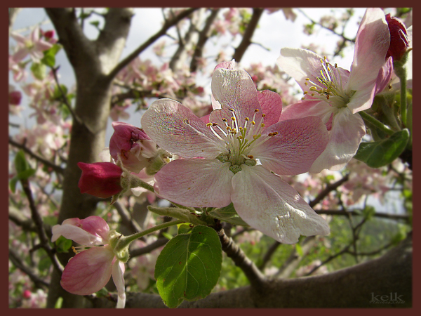 spring my home in shahroud - iran
