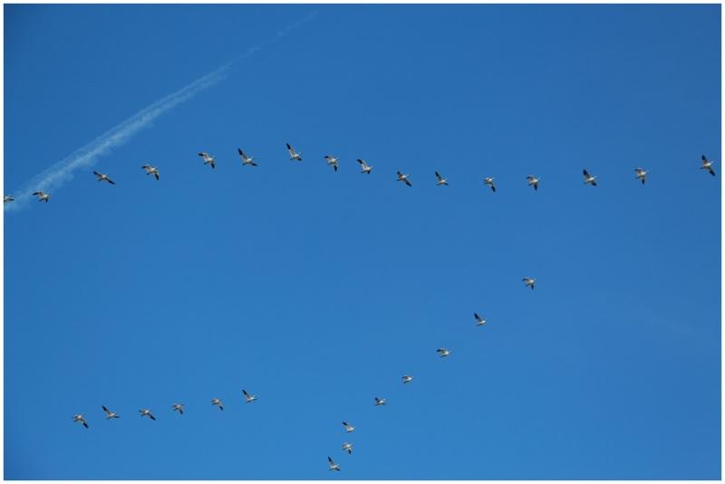 Birdship