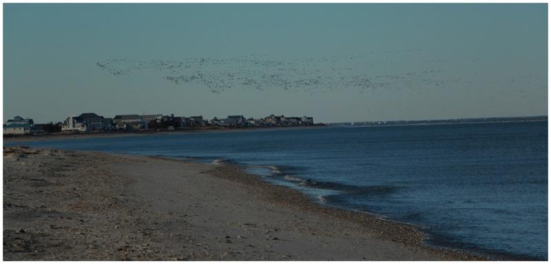 Birds going home