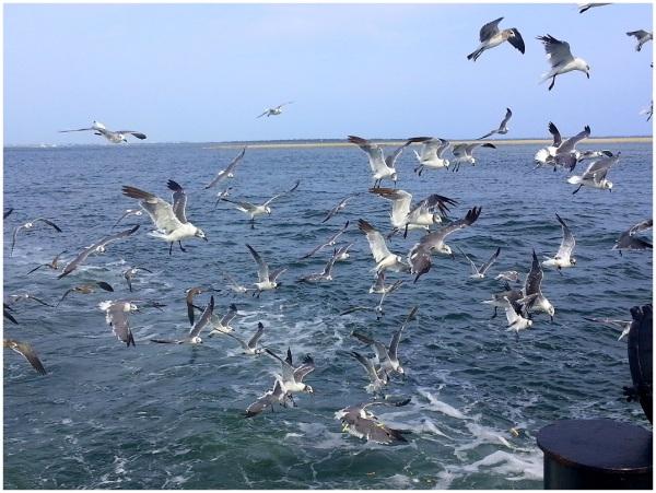 Birds follow me.....
