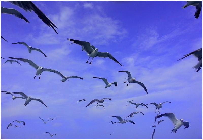 Birds follow me.....2
