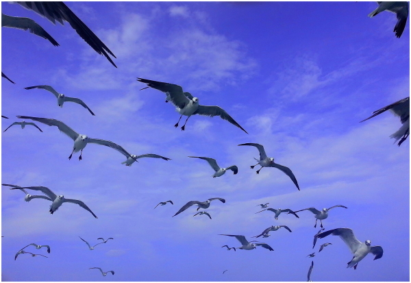 Birds like me...: ) 2