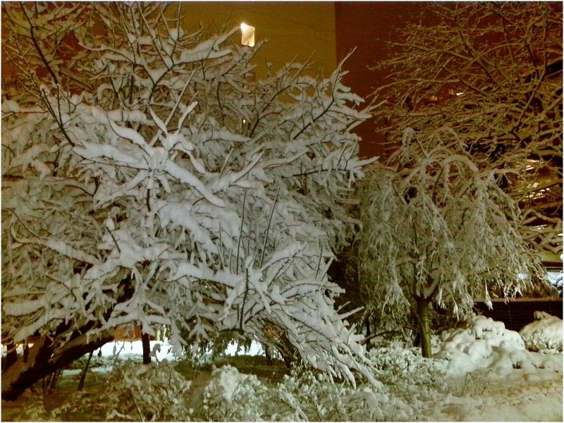 Beautiful Snow Trees