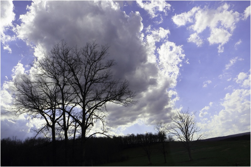 """Tree says """"This is my Cloud"""" ;-)"""