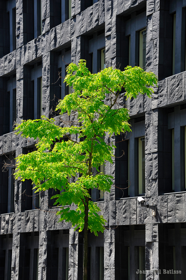 """""""Comme un arbre dans la ville"""""""