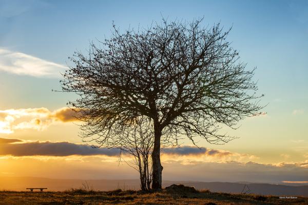 L'arbre des Pradeaux