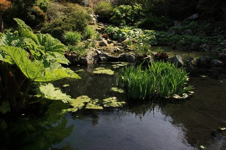 Bassin du jardin public